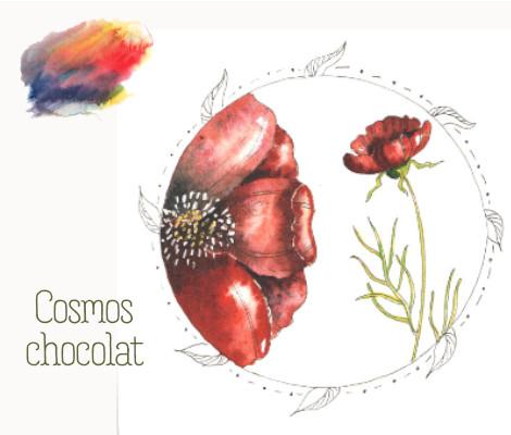 Le cosmos chocolat
